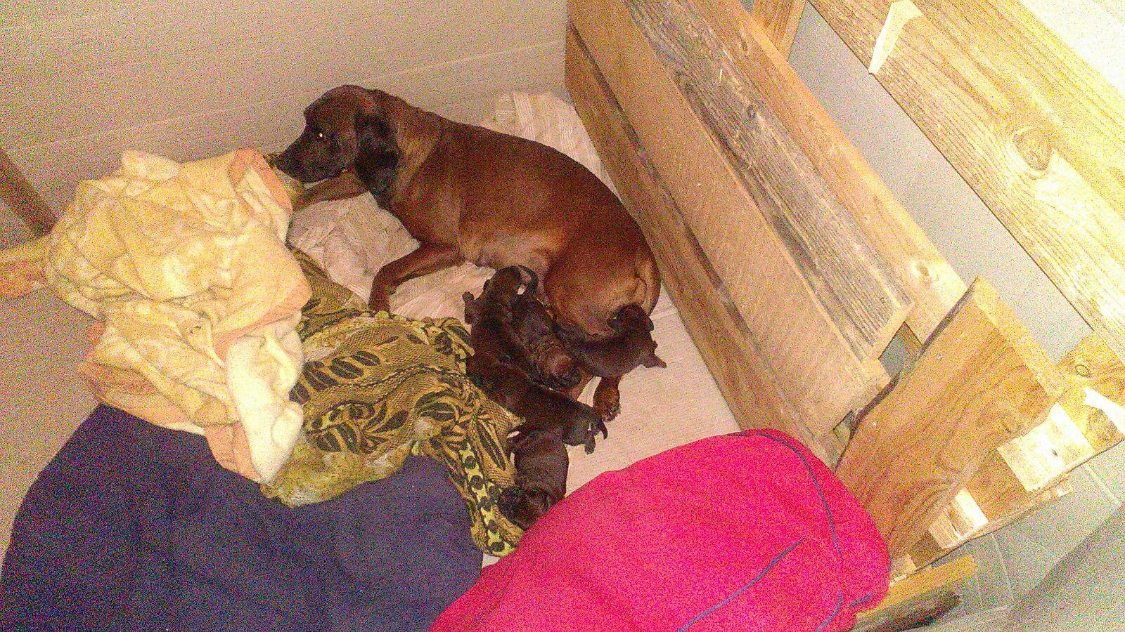 I cuccioli di Perla e Diuck